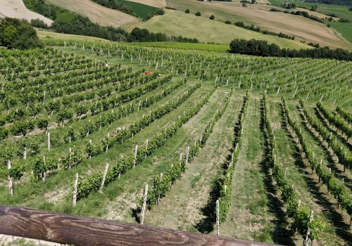 Slow Wine Scouting – Oasi Bellaluce (Marche)
