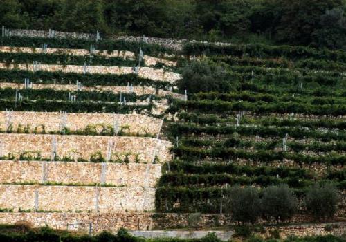 Monte Olmi e il sapore della collina