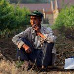La Cina è il primo produttore mondiale di uva