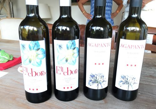 Slow Wine Scouting – Podere Conca (Toscana)