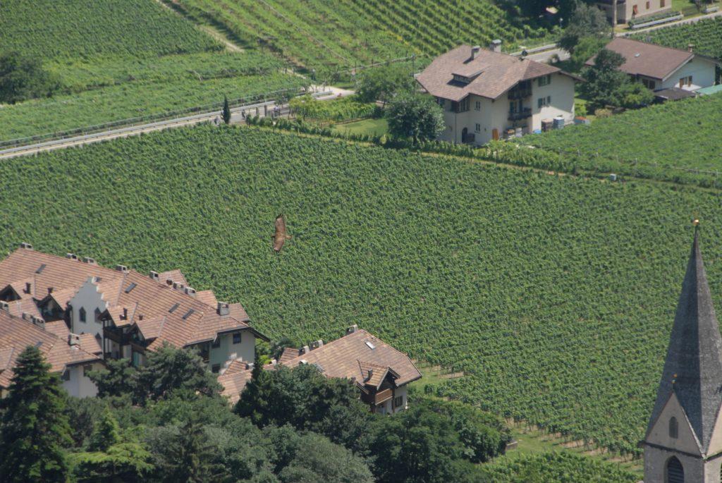 Alto adige vigne in volo
