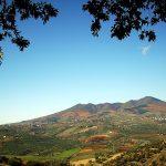 Riconoscimenti Slow Wine 2020: Basilicata e Calabria