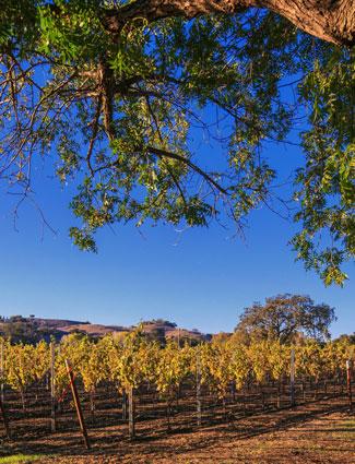 palmina vineyard