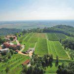 Riconoscimenti Slow Wine 2020: Friuli-Venezia Giulia