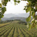 Riconoscimenti Slow Wine 2020: Veneto