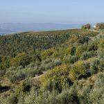 Riconoscimenti Slow Wine 2020: Toscana