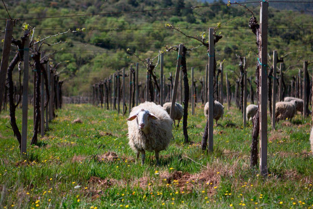 Le vigne di Valle Reale