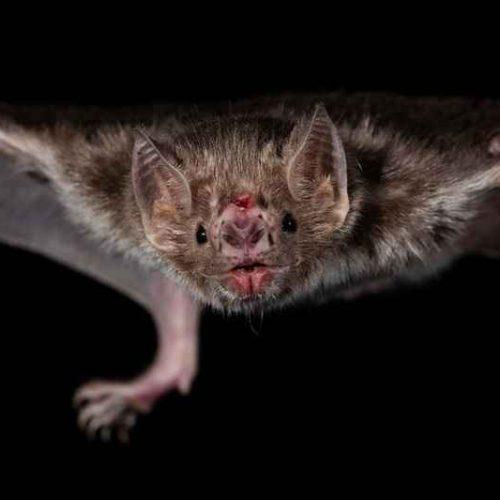 Topo, volatile, pipistrello: bestiario minimo del vino naturale