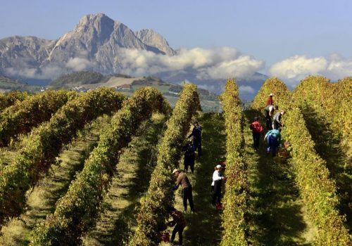 I territori dei vini rosa in Italia #3: Cerasuolo d'Abruzzo