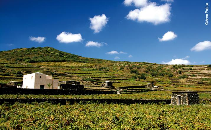 Pantelleria vineyards