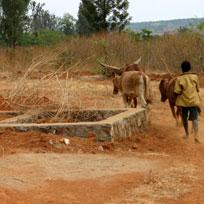 Land-grabbing: i governi di Nigeria e Sierra Leone invitano i neo-colonialisti agricoli a frasi avanti.