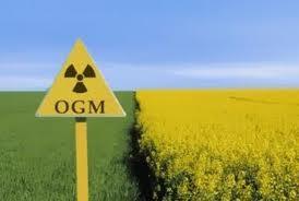 OGM, arrivano quattro nuove autorizzazioni dalla Commissione Europea