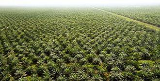 L'olio che mangia l'Africa