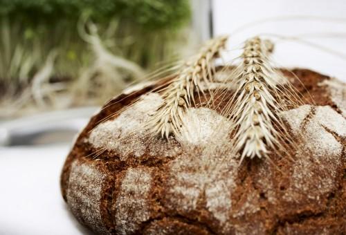 La rinascita dei grani antichi è molto più che una moda