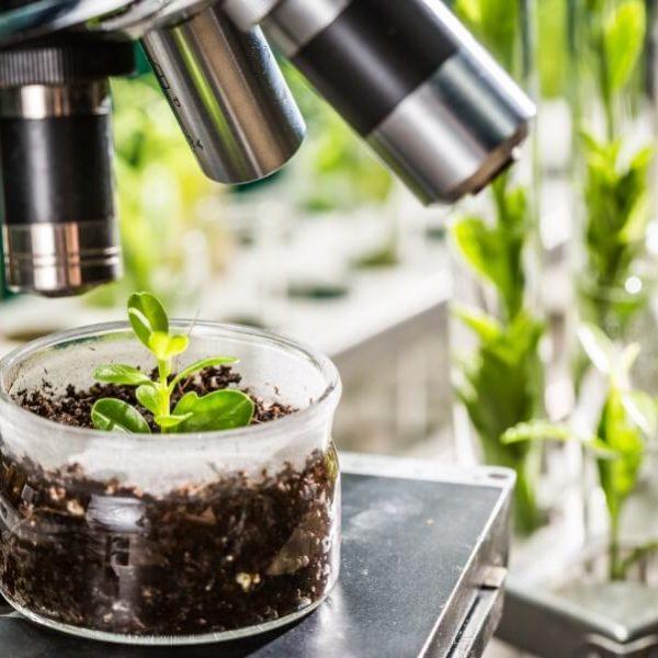 L'editing genetico e l'esaltazione della prepotenza