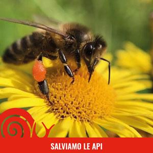 Difendiamo le api