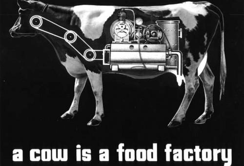 Crisi dei prezzi, piangiamo sul latte versato