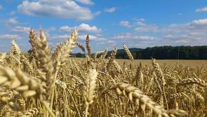 Cambiamo l'agricoltura con una Pac più verde