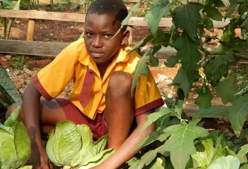 L'Africa verde che si rimbocca le maniche