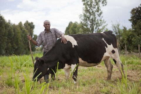 Farmer Paul Kimani Muchai, on his farm in OL Kalou, Kenya on November 1, 2011.