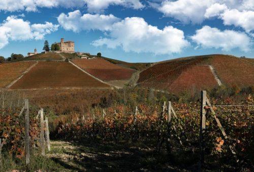 Barolo: stop agli impianti di nuove vigne per tre anni. «Non facciamo passare questo tempo invano».