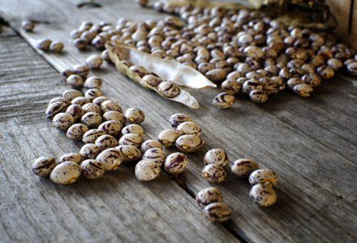 Facciamo dei semi un bene comune. In Nepal la banca dei semi vivente