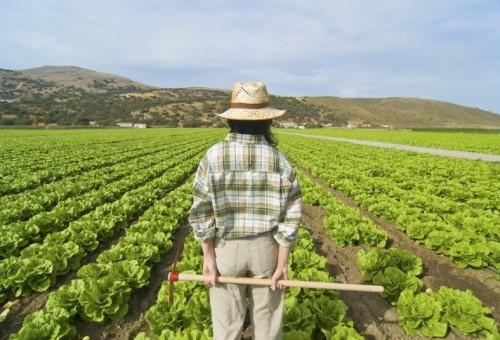 Agricoltura contadina, una legge per spezzare le catene della burocrazia