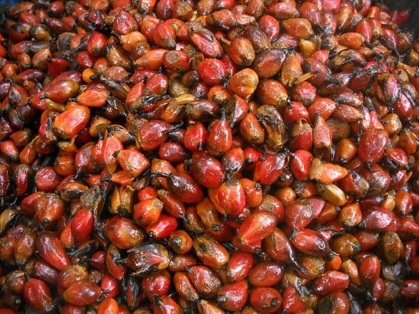 Olio di palma selvatica
