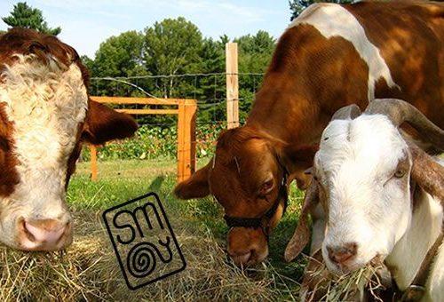 Slow Meat 2015 riunisce tutti a tavola per correggere il sistema di produzione industriale della carne