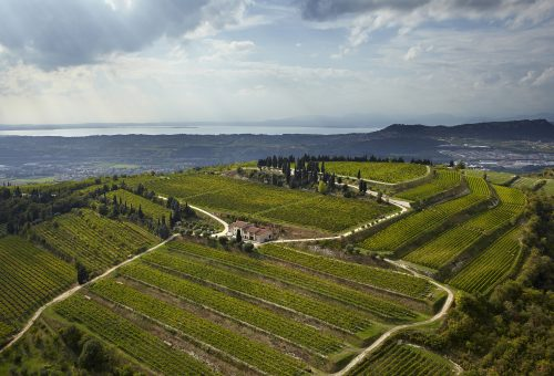 Dalla neve d'estate al boom dell'Amarone. Slow Food e la Valpolicella di Franco Allegrini