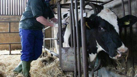 antibiotics_livestock