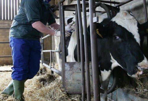 Antibiotici: dannosi per la salute, e per l'agricoltura contadina