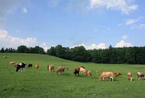 Esiste un'alternativa agli allevamenti industriali?