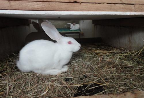 Coraggio coniglio: la Lav promuove una raccolta firme