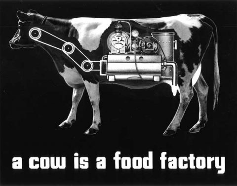 cow_factory