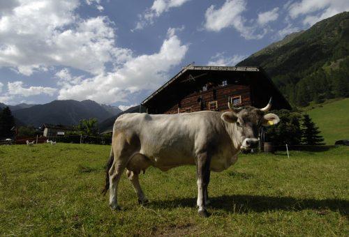 La strada del latte per salvare le montagne dall'abbandono