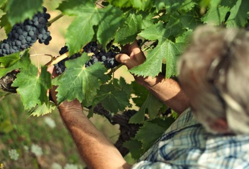 """Petrini apre la nuova stagione dei """"Signori del Vino"""" su Rai2"""