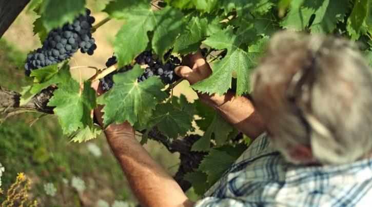 vinnatur-home-slide-vino-naturale
