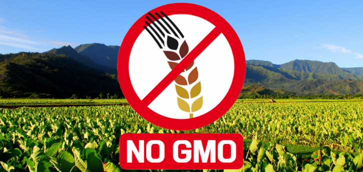 gmo_no_field_taro-735x350
