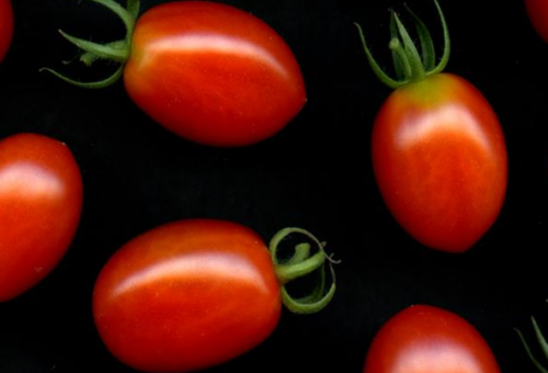 Il sapore (vero?) dei pomodori