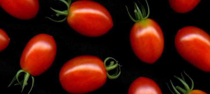 pomodori science