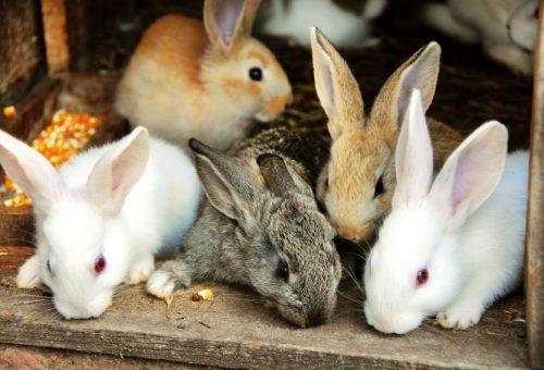 Mai più conigli in gabbia. E ora?