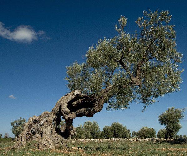 «Piantiamo 60milioni di alberi». Slow Food aderisce all'appello lanciato dalle Comunità Laudato Si'
