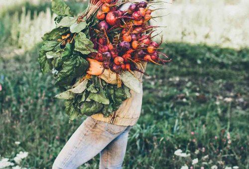 Agricoltura, l'occupazione non basta se i redditi non crescono