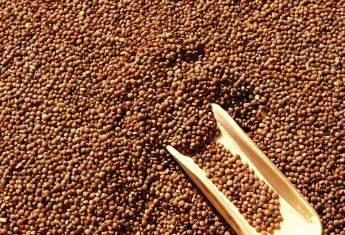 A rischio il futuro delle lenticchie di Santo Stefano di Sessanio