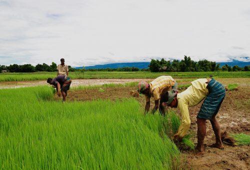 Giornata mondiale dell'alimentazione: la fame aumenta, ma non fa notizia