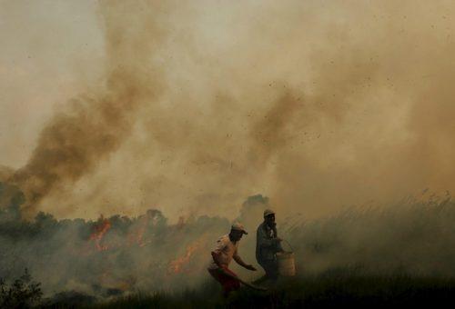 Olio di palma: le deforestazioni non si fermano