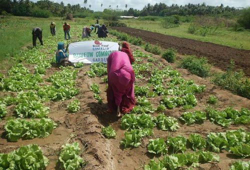 Somalia, la piccola rivoluzione degli orti Slow Food