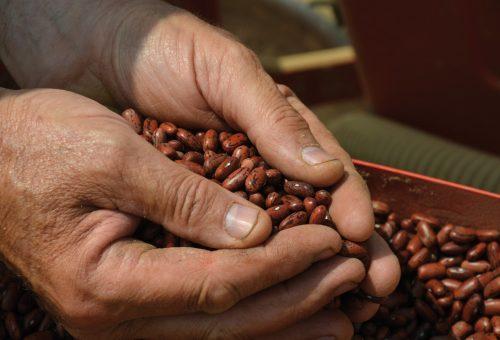 L'agricoltura contadina è comunità