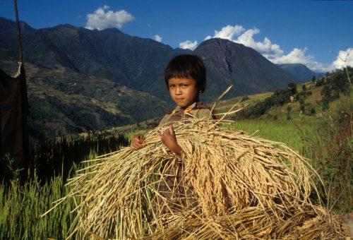 Pesticidi e salute, sono i bambini a pagare il prezzo più alto